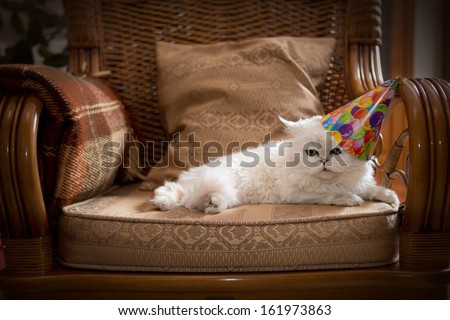 Cute cat wearing a party hat relaxing on an armchair - stock photo