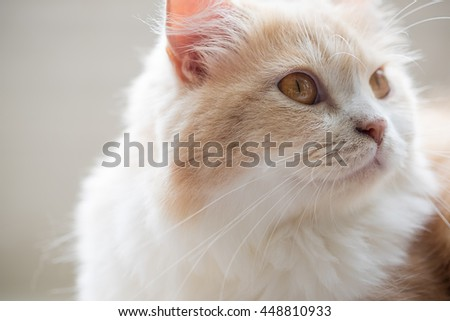 Cute cat with blurred background - stock photo