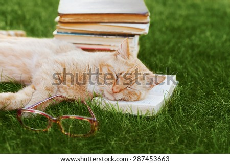 Cute cat with book and glasses sleeping on green grass, funny pet  - stock photo