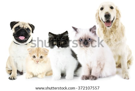 Cute cats and dogs, isolated on white - stock photo