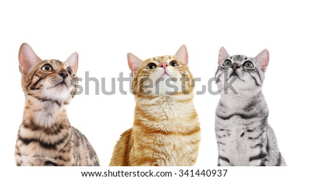Cute cats isolated on white - stock photo