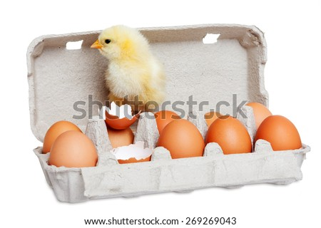 Cute chick with eggs - stock photo