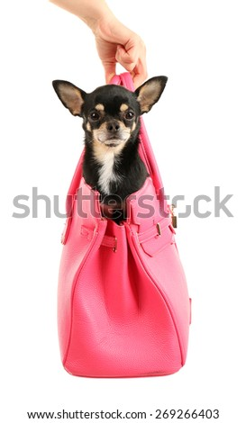 Cute chihuahua puppy in pink female bag isolated on white - stock photo