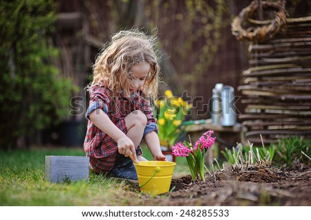 cute child girl plays little gardener and planting hyacinth flowers to the ground in spring garden - stock photo