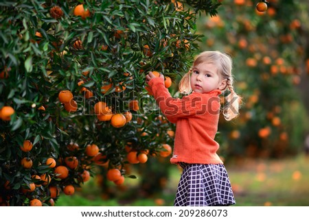 cute child picking harvest of fruit at the farm - stock photo