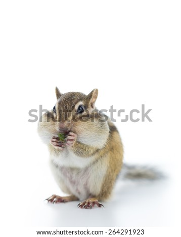Cute Chipmunk eating pet food. - stock photo