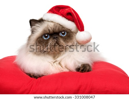 Cute Christmas persian colourpoint cat in a Santa hat is lying on a red cushion, isolated on white background - stock photo