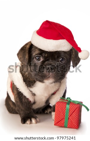 Cute Christmas puppy isolated on white - stock photo