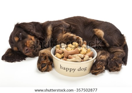 Cute Cocker Spaniel puppy dog sleeping by Happy Dog bowl of boned shaped biscuits - stock photo