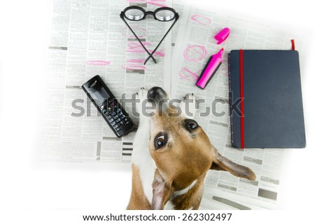 Cute cool puppy looking for a job. Newspaper advertisement and marker notes offer - stock photo