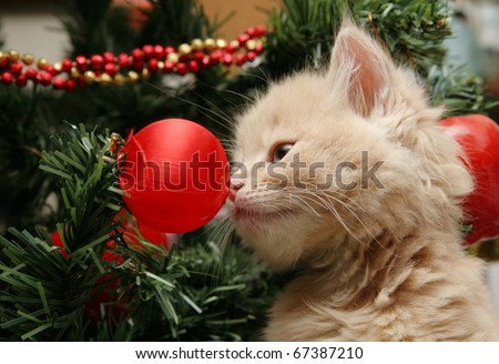 Cute cream fluffy kitten investigating the decorations on a Christmas tree - stock photo