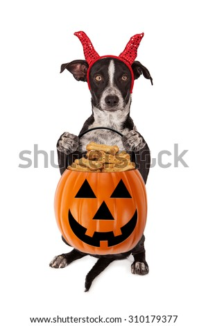 Cute crossbreed puppy wearing a devil Halloween costume while sitting up and holding a pumpkin shaped pail filled with dog treats - stock photo