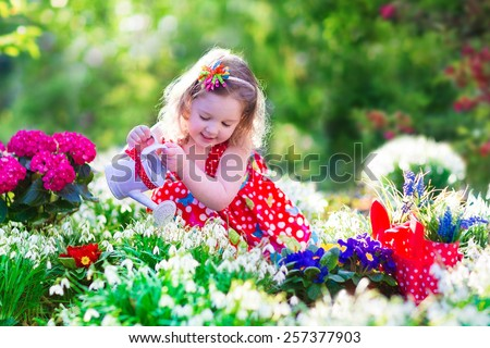 Cute curly little girl in a red summer dress working in the garden watering first spring flowers on a sunny day. Kids gardening. Child working in the backyard. Kid with water can. Children outdoors. - stock photo