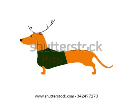 Cute dachshund wearing Christmas suit, green jersey decorated with red stripes and brown reindeer horns - stock photo