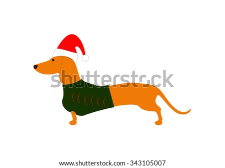 Cute dachshund wearing Christmas suit, green jersey decorated with red stripes and red hat - stock photo