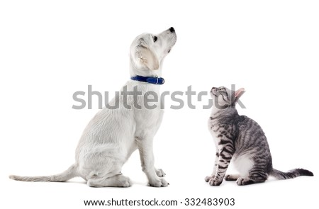 Cute dog and cat isolated on white - stock photo