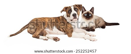 Cute dog and cat together. Image sized for popular social media timeline cover image - stock photo