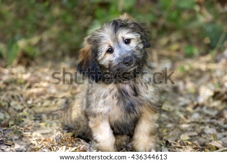 Cute dog is an adorable fluffy puppy dog looking at you with those irresistible eyes. - stock photo