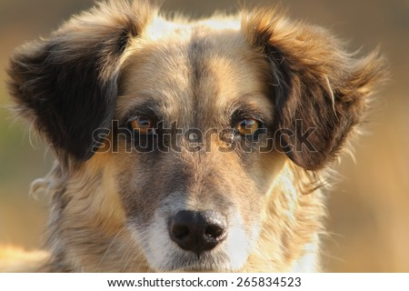 cute dog portrait, close up on furry  head - stock photo