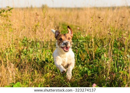 Cute dog running freely at field - stock photo