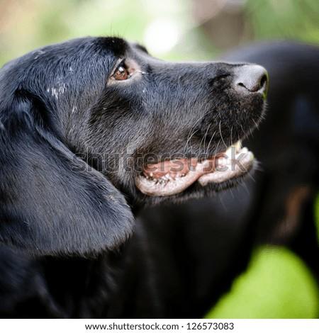 Cute dog sad dog - stock photo