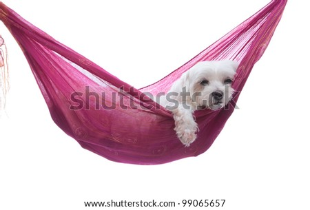 Cute dog siesta or lazing around under a beautiful summer sky - stock photo