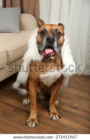 Cute dog sitting near sofa, on home interior background - stock photo