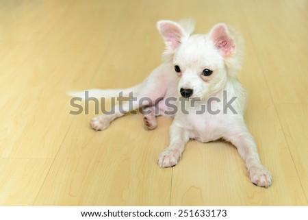 Cute dog sitting on wood floor - stock photo