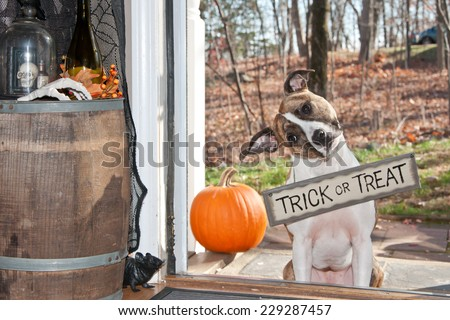 Cute Dog Trick or Treating - stock photo