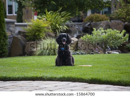 cute dog waiting to play...toy next to dog - stock photo