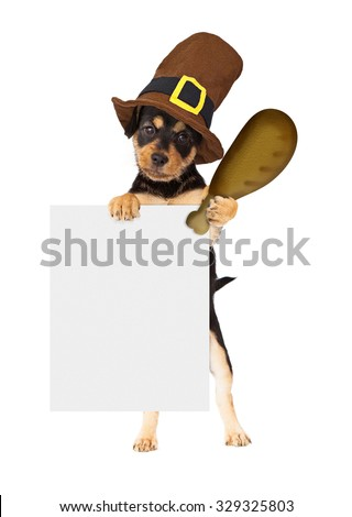 Cute dog wearing Thanksgiving pilgrim hat holding a big turkey leg and a blank sign to enter your marketing message onto - stock photo