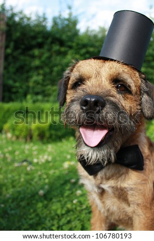 Cute dog with bow tie and top hat - stock photo