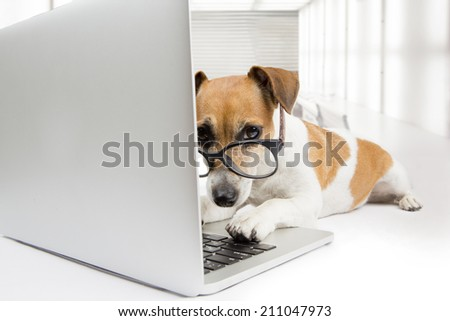 Cute dog works in the office at the computer. Concentration and strictly looking at the camera - stock photo