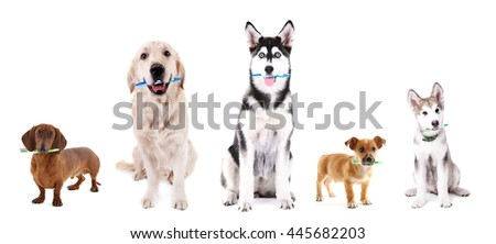 Cute dogs with tooth brushes, isolated on white - stock photo