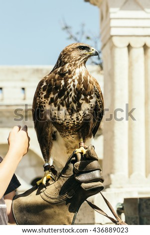 cute eagle with white and brown feathers and sharp beak sitting outdoor on human hand in glove closeup - stock photo