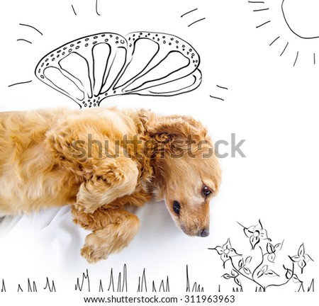 Cute English Cocker Spaniel puppy in front of a white background with butterfly wings and spring sketch. - stock photo