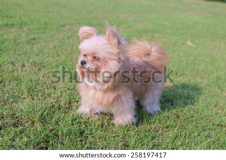 cute fluffy dog playing in the garden - stock photo