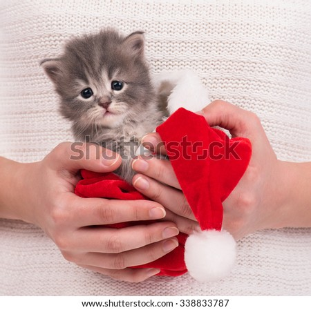 Cute fluffy kitten in the red cap on female hands over white background - stock photo