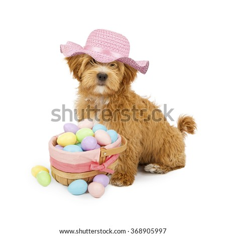 Cute fluffy puppy wearing pink Easter bonnet with basket of pastel color eggs - stock photo