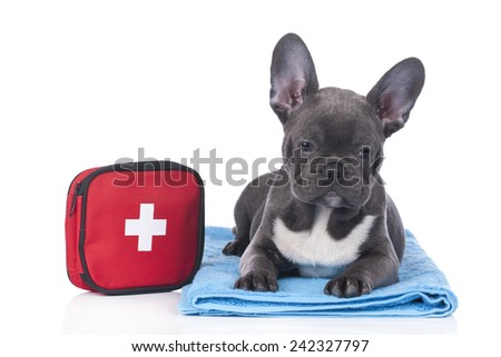 Cute French bulldog with first aid kit - stock photo