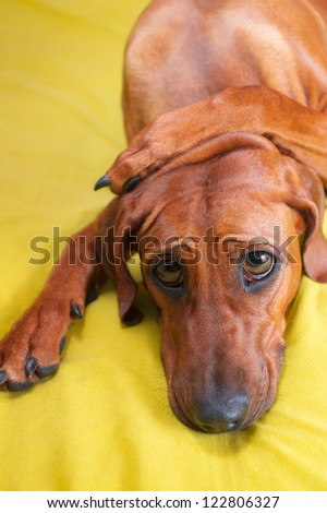 Cute funny dog puppy with paws crossed on her head and huge eyes - stock photo