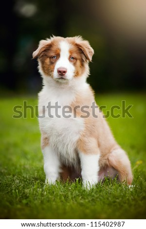 cute funny little puppy sitting on the grass - stock photo