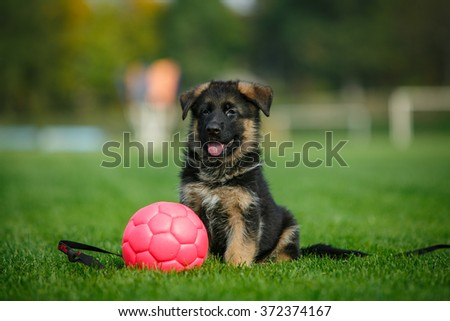 Cute German Shepherd puppy sitting with a pink ball in the park on a green lawn - stock photo