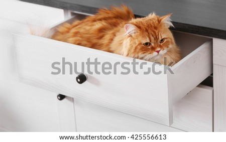 Cute ginger cat in chest of drawers - stock photo