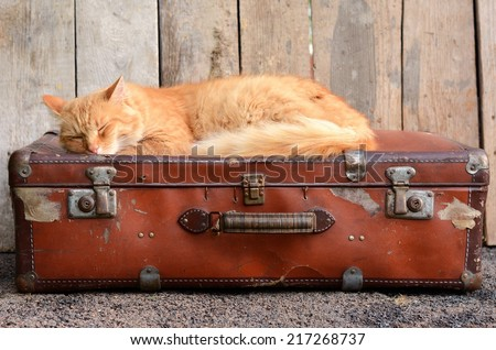 Cute ginger cat sleeping on old suitcase - stock photo