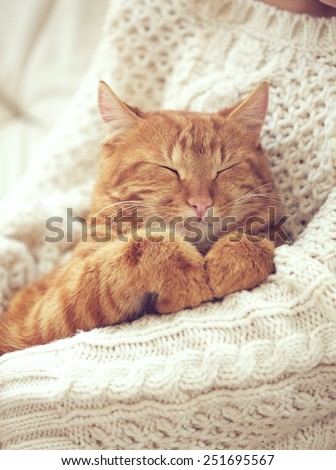Cute ginger cat sleeps on warm knit sweater - stock photo