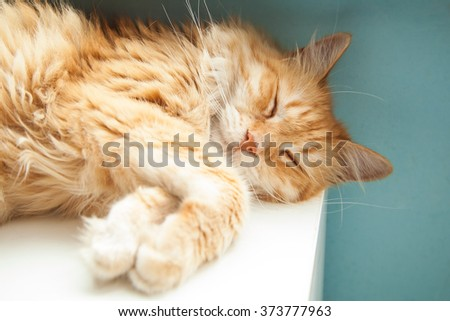 Cute ginger cat with long hair sleeping on the closet - stock photo