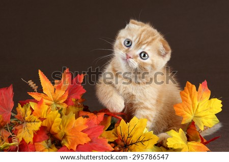 Cute ginger kitten hiding in yellow leaves - stock photo