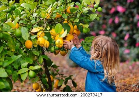 cute girl pick up harvest of lemon in autumn farm - stock photo
