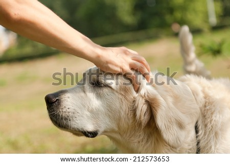 Cute golden retriever and the hand of the host - stock photo